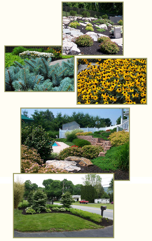 Perennial Gardens, Landscape Renovations - Plantings